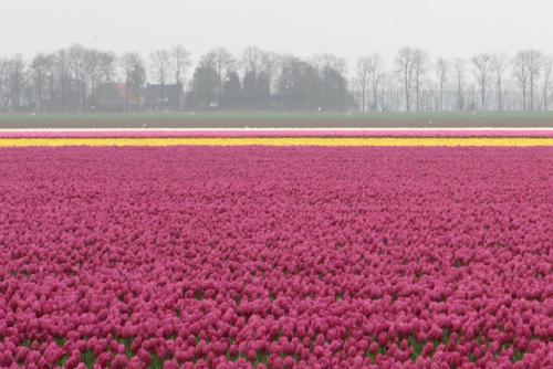tulpenronde 2012 1781